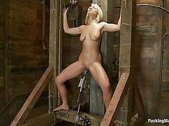 Porn Obstacle Course for Hot Amateur: Zipline of Vibrators, Spanking Sybian Ride, Wet Pussy Pounding