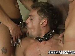 Shemale Blowjob Slave