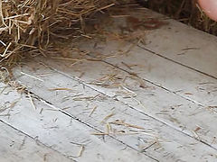 Girl with groomed long hair taking off clothes and showing body in the barn on flv video.